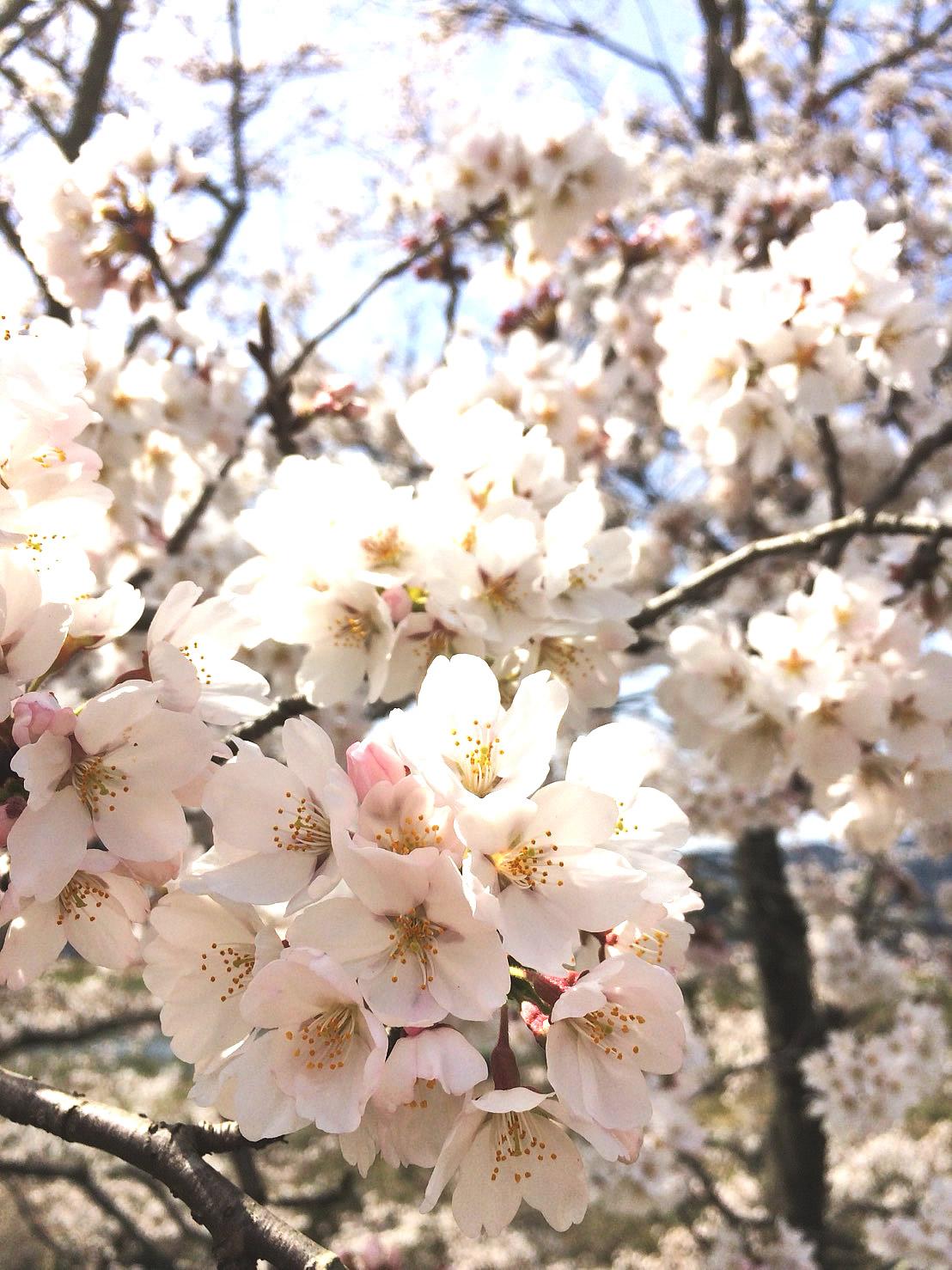 2018年 新しい春